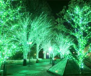 クリスマスイルミネーションの販売事例【千葉県松戸市】