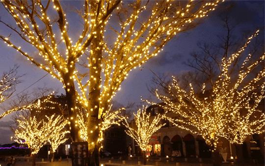 設置場所から選ぶ。クリスマスツリー・樹木の装飾に最適なLEDイルミネーション
